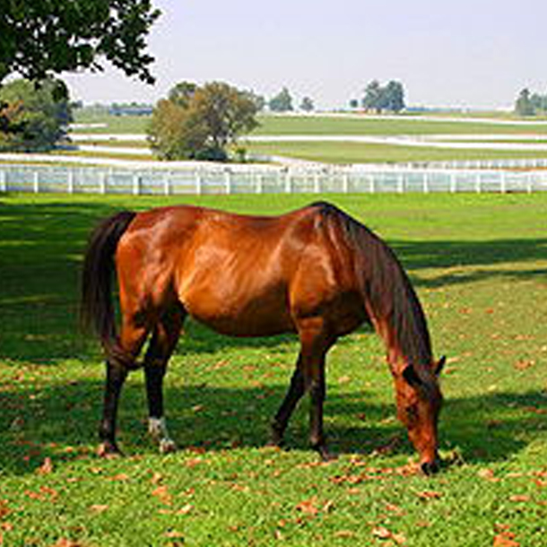 lexington-ky-horse-farms 610x610